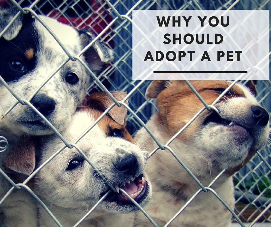 every family should adopt a pet Frequently asked questions regarding pet adoption, animal  the foster family will be able to adopt the pet  file a lost animal report with every local .